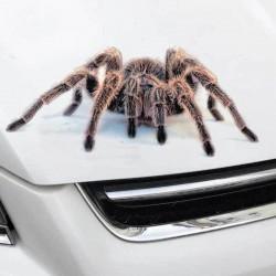 3D Стикер за кола тарантула - водоустойчив
